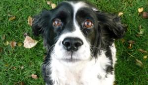 Hondenpoep: daar trappen we niet in
