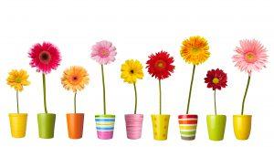 Pluk de dag: Twee fleurige activiteiten